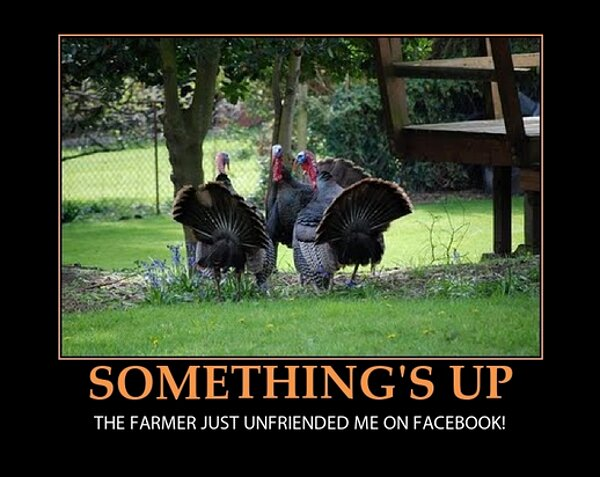 Somethings-up.-The-farmer-just-unfriended-me-on-Facebook-funny-Thanksgiving-turkeys